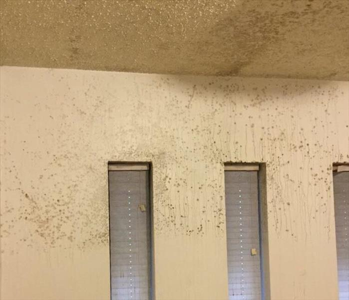 Steam causes Mold through home
