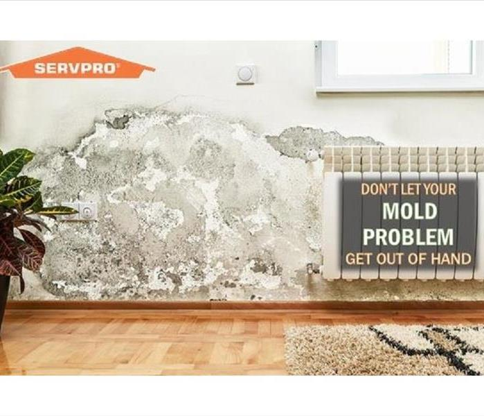 Mold Remediation Mold vs. Mildew; What's the difference?
