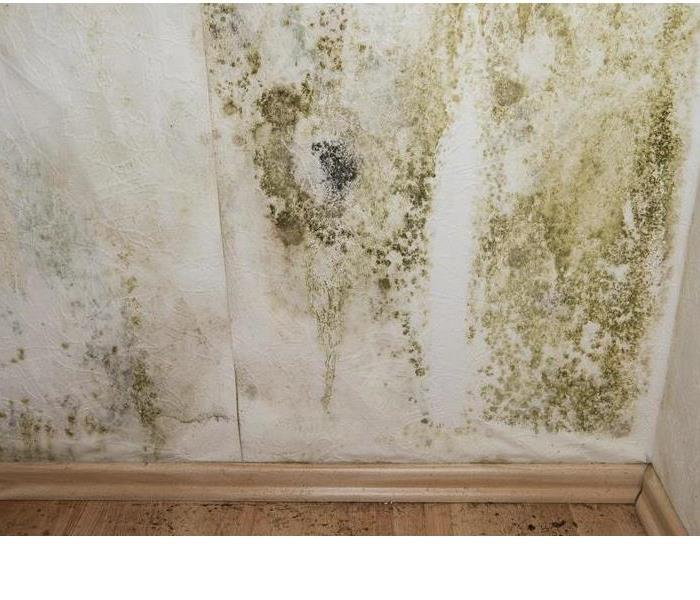 Mold Remediation Does Your East Ft. Worth (DFW) Home Have A Mold Problem?